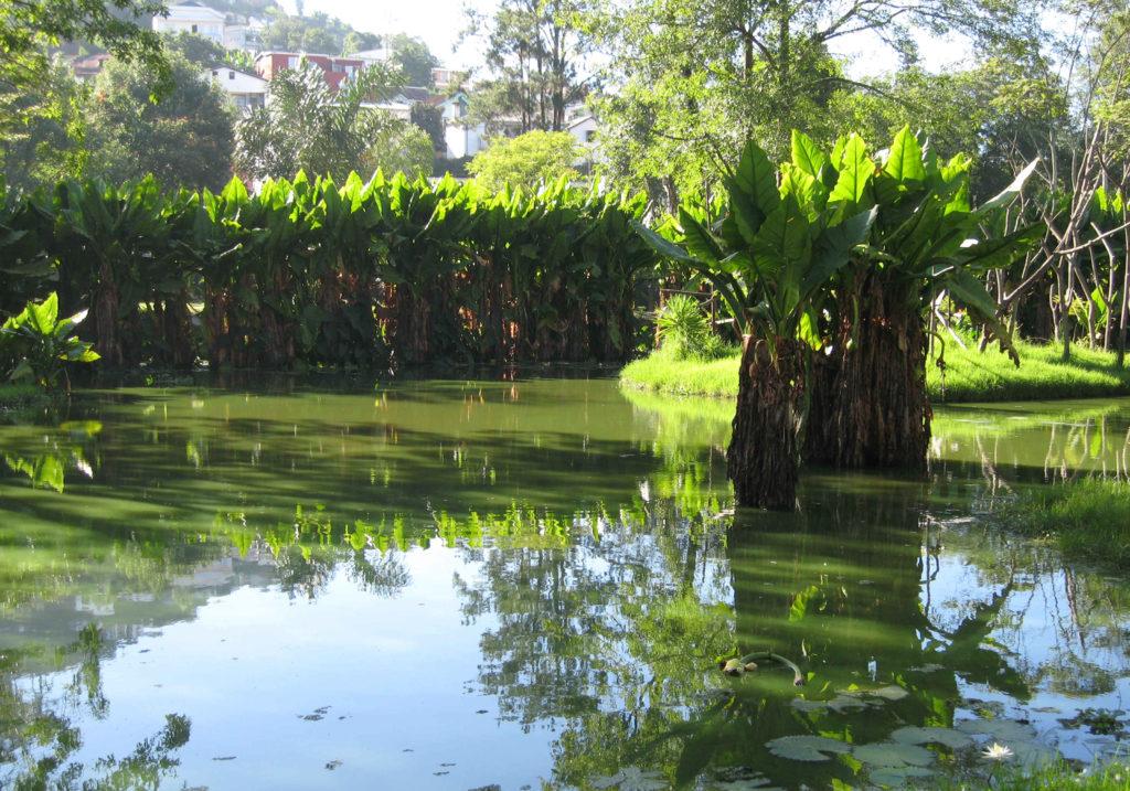 Le parc de Tsimbazaza