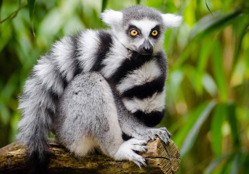 Top 10 des activités à faire à Madagascar